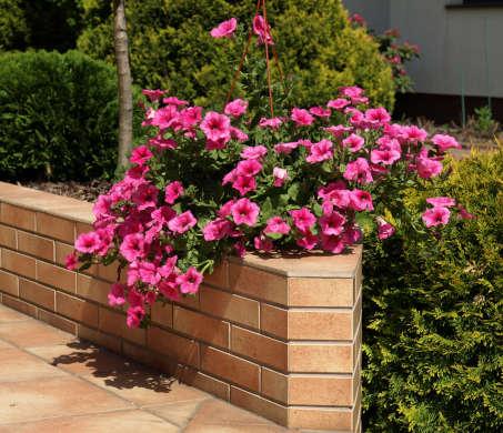entretien jardins tournai