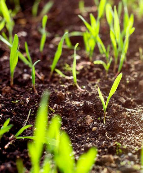 semis pelouse tournai
